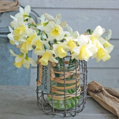 Curlew-Narcissus-FAM-Flower-Farm-4-AA_low