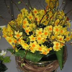 Narcissus-Martinette_Van-der-Slot-Lisse-230