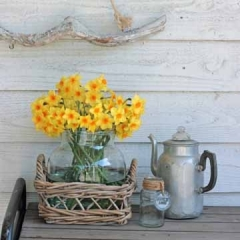 Martinette-Narcissus_FAM-flower-farm-sfeer-24-AA-vierkant_low
