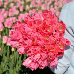 Tulip Dynasty Van der Slot Lisse 5
